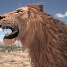 Lion The King Textured Hair 3D Model
