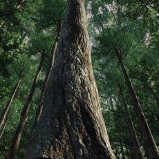 Forest Scene 7 3D Model