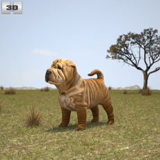 Shar Pei Puppy 3D Model