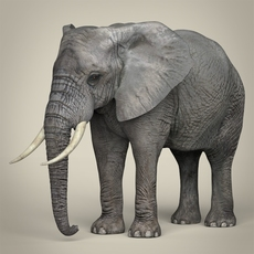 Realistic Asian Elephant 3D Model