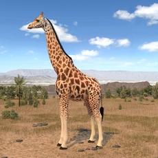 Giraffe rigged for 3dsmax 3D Model