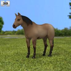 American Quarter Horse 3D Model