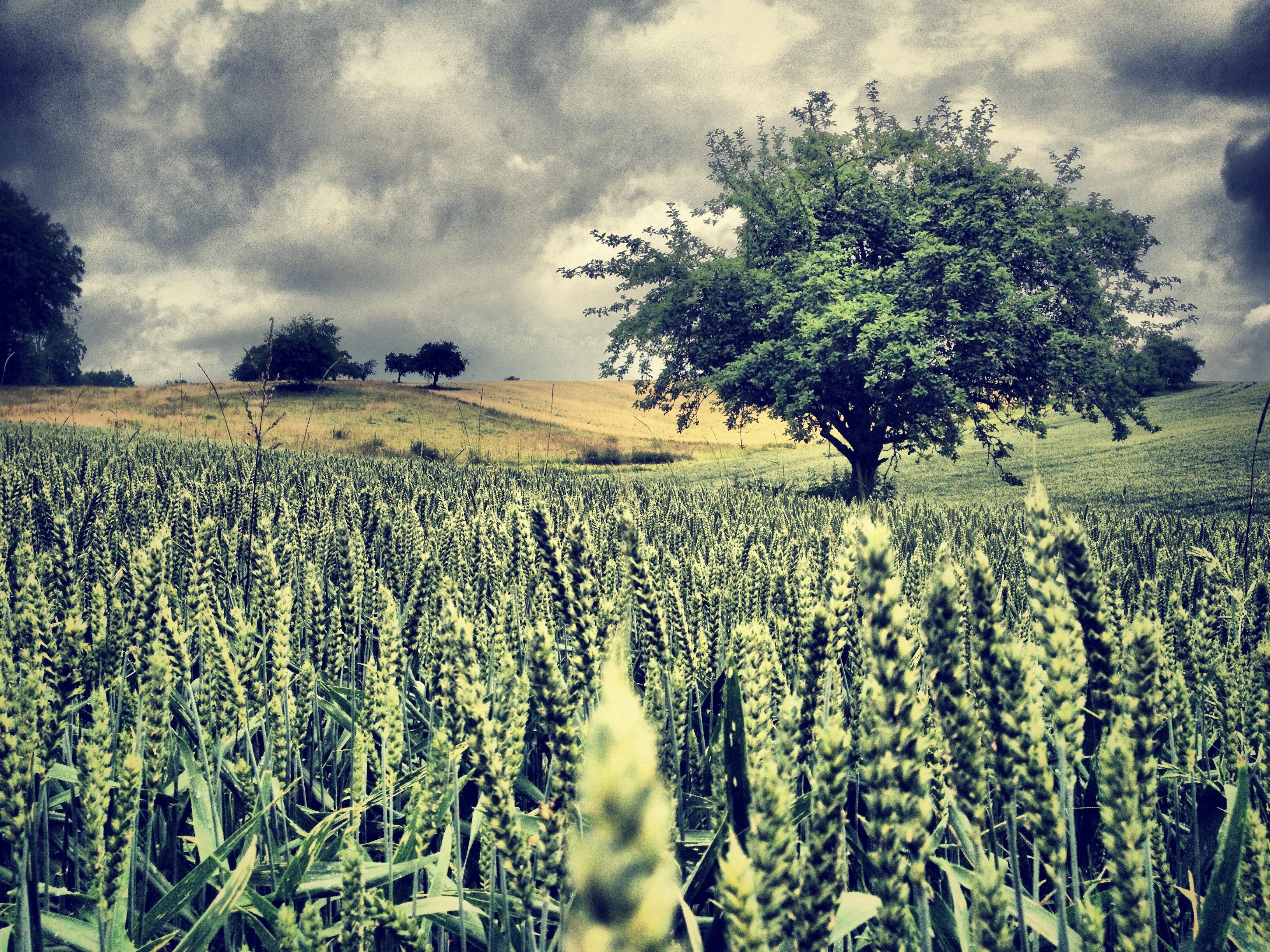 Green Field - Jakob Montrasio