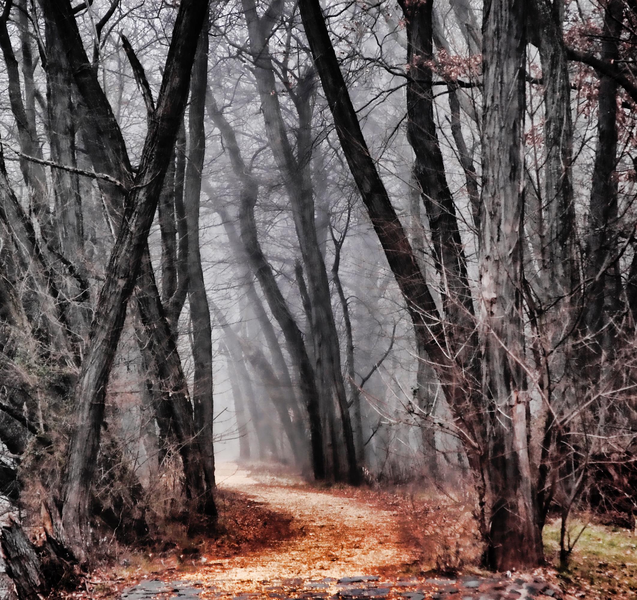 Dark Trail - Scott Hudson