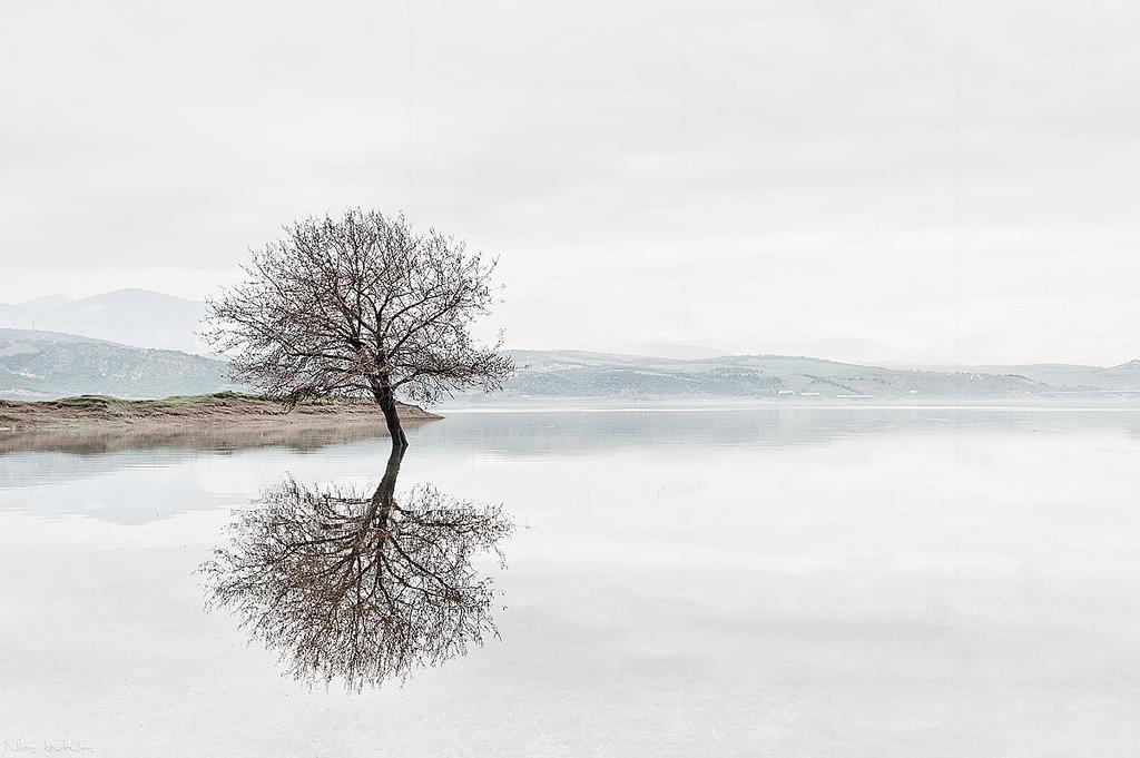 Tree eflection - Nikos Koutoulas