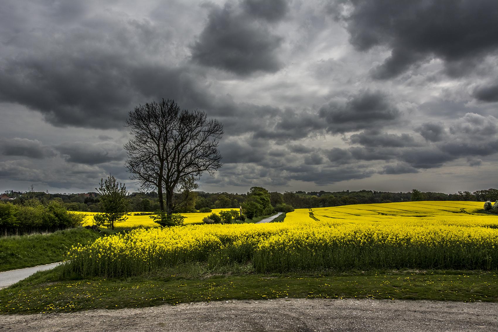 Yellow fields and gray skies - Fc Nikon