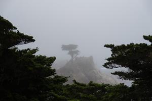The Lone Cypress, Monterey, CA