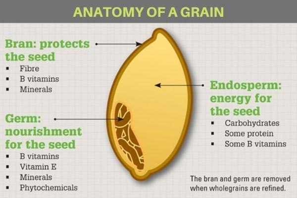 Anatomy of a grain