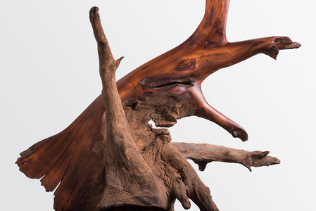 DAVID ERDMAN Archive cocobolo river driftwood with paste wax