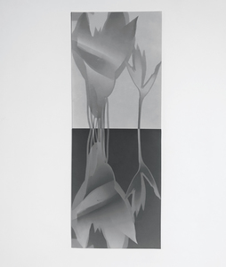 ENNID BERGER Botanicals unique silver gelatin photogram