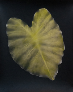 ENNID BERGER Botanicals oil paint on silver gelatin photogram