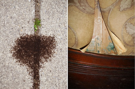 N.Y. Photo Curator: Global Photography Awards- 'Where Photography & Philanthropy Meet' SECOND PLACE: JULIE MIHALY - 'Notes in Passing (Ants/Wallpaper)'