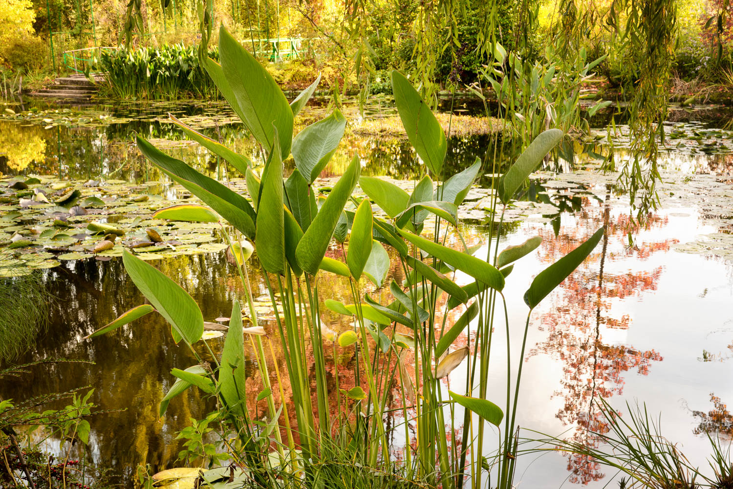 Giverny Giverny 7