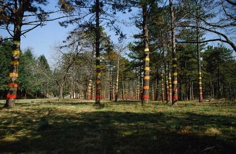 Roy Wilson Public Art hand dyed muslin on 55 pine trees