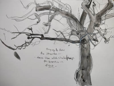 The Amber Tree Drawing Collaborative