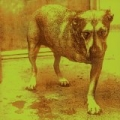 Alice In Chains by Alice In Chains