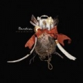 The Clearing [+Digital Booklet] by Bowerbirds