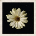 Flower by Cody Simpson