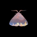 Ch-Ching by Chairlift