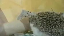 Parry Gripp 'Boogie Boogie Hedgehog' music video