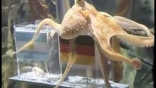 Parry Gripp 'Paul The Octopus' music video
