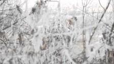 Foxhound 'Hall' music video