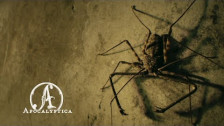 Apocalyptica 'En Route To Mayhem' music video