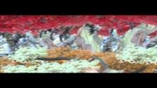 Tali Febland 'Tree Tops' music video
