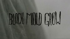 Levek 'Black Mold Grow' music video