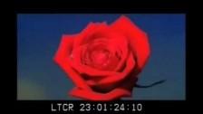 Lana del Rey 'Carmen' music video