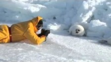 Parry Gripp 'Lazy Harp Seal Has No Job' music video