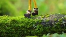 Language Arts 'Wonderkind' music video