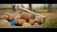Funky Pushertz 'Veng e Patan' music video