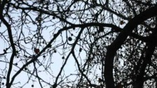 PJ Harvey 'Bitter Branches' music video