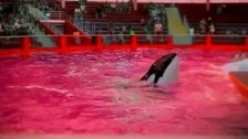 Sir Michael Rocks 'Fuck SeaWorld' music video