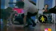 The Dandy Warhols 'Smoke It' music video