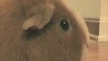 Parry Gripp 'Dramatic Chipmunk Hey' music video