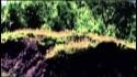 Allan Kingdom 'Thirsty' Music Video