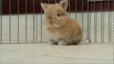 Parry Gripp 'Baby Bunny' music video