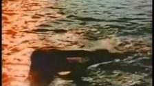 Lilacs & Champagne 'Sensations' music video
