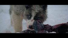 Geoffroy 'Raised By Wolves' music video