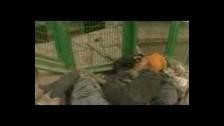 Mythos (3) 'Purity' music video