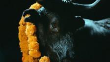 Foals 'Black Bull' music video