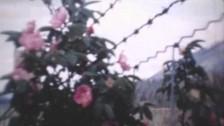 Alice Boman 'Burns' music video