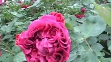 Monsterheart 'Sleep' music video