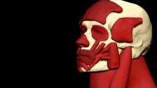 Damon Albarn 'Everyday Robots' music video