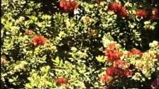 Literature 'Kites' music video