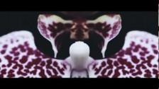 Dominic Lord 'Pierce' music video