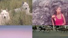 DJDS 'Trees On Fire' music video