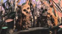 Keaton Henson 'Small Hands' Music Video